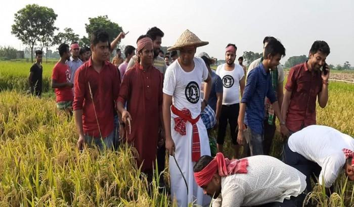 কৃষকদের সঙ্গে ধান কাটলেন ছাত্রলীগ সাধারণ সম্পাদক